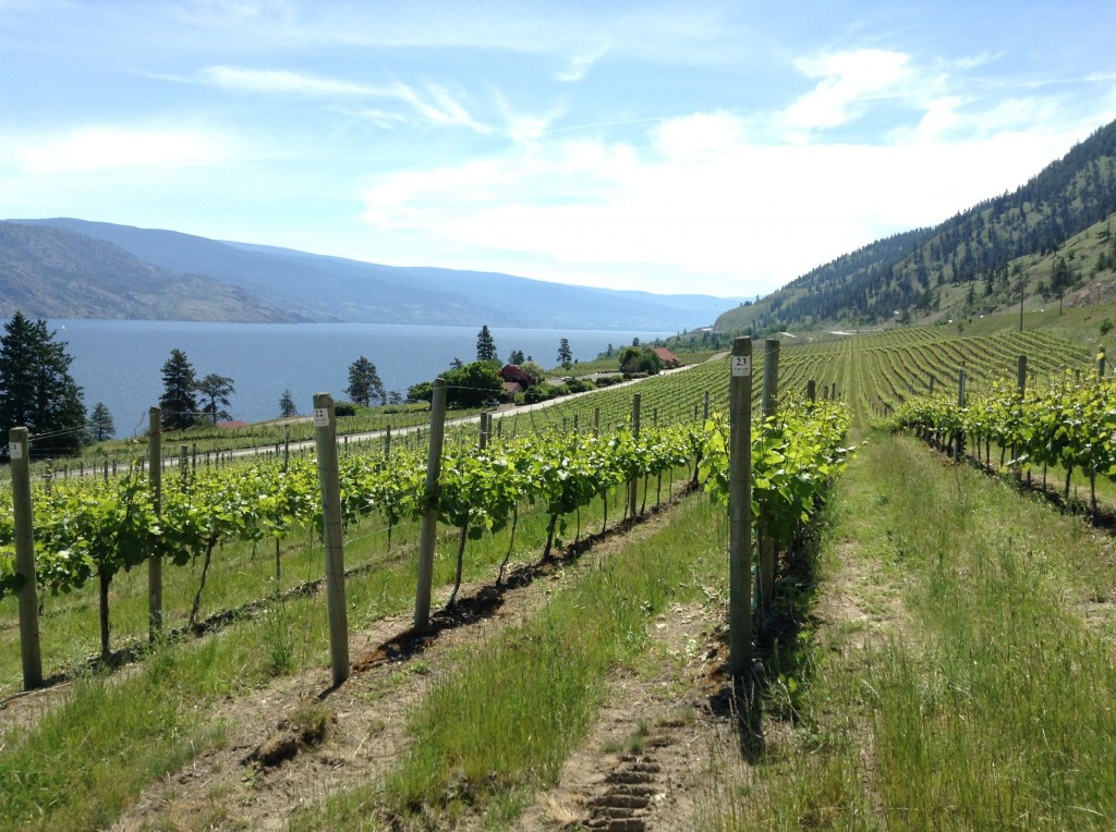 I heard on the grapevine that the Okanagan region produces some fine wine. Groan.
